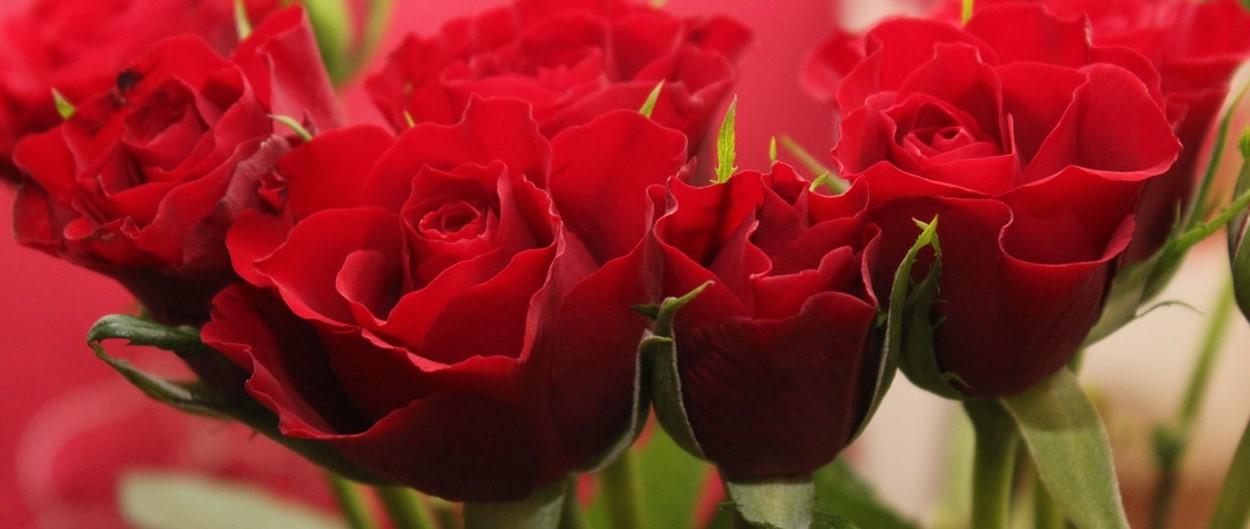 Valentines-5